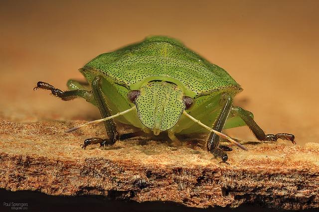 bug-189903_640